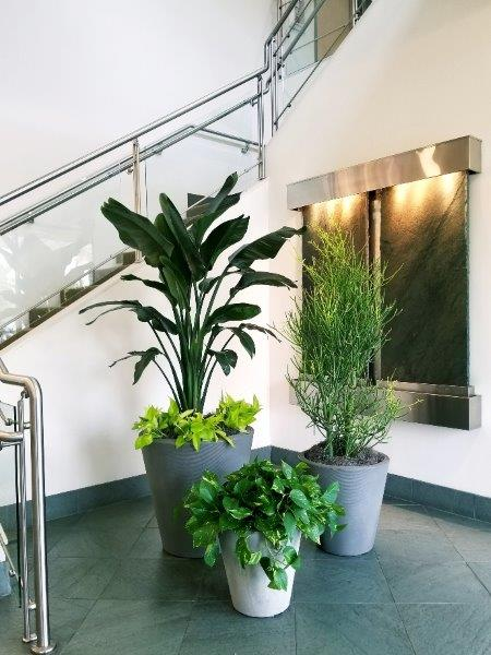 Office Plant Specialists background