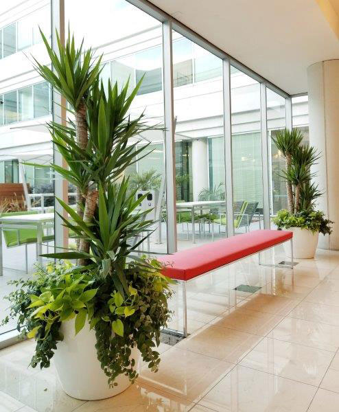 About Us-Office Plant Image