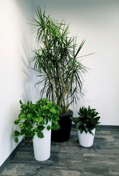 About Us - Office Plants Image 2