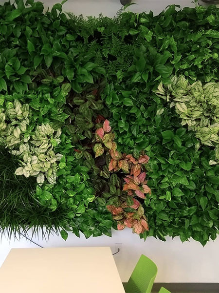 Living Wall Experts Background Image