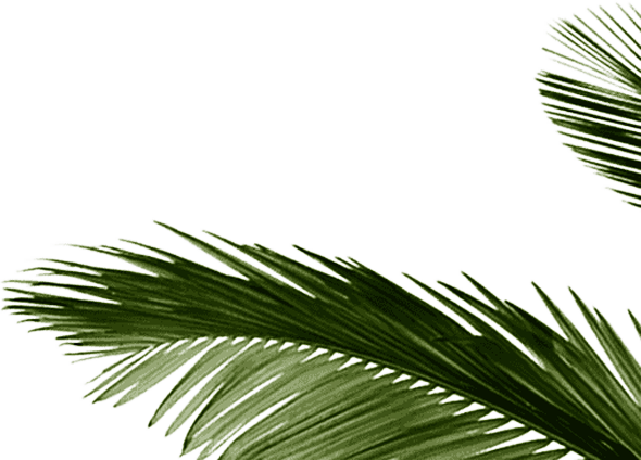 background leaf right