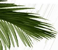background leaf left